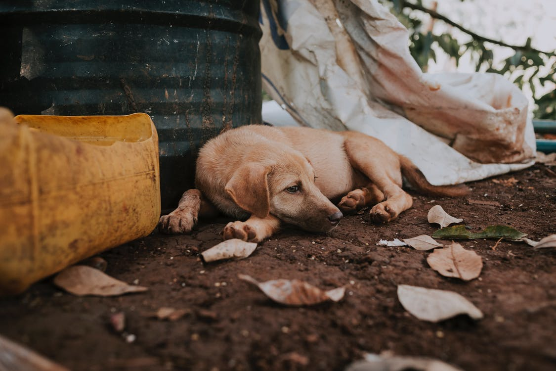 Sad homeless dog lying on street