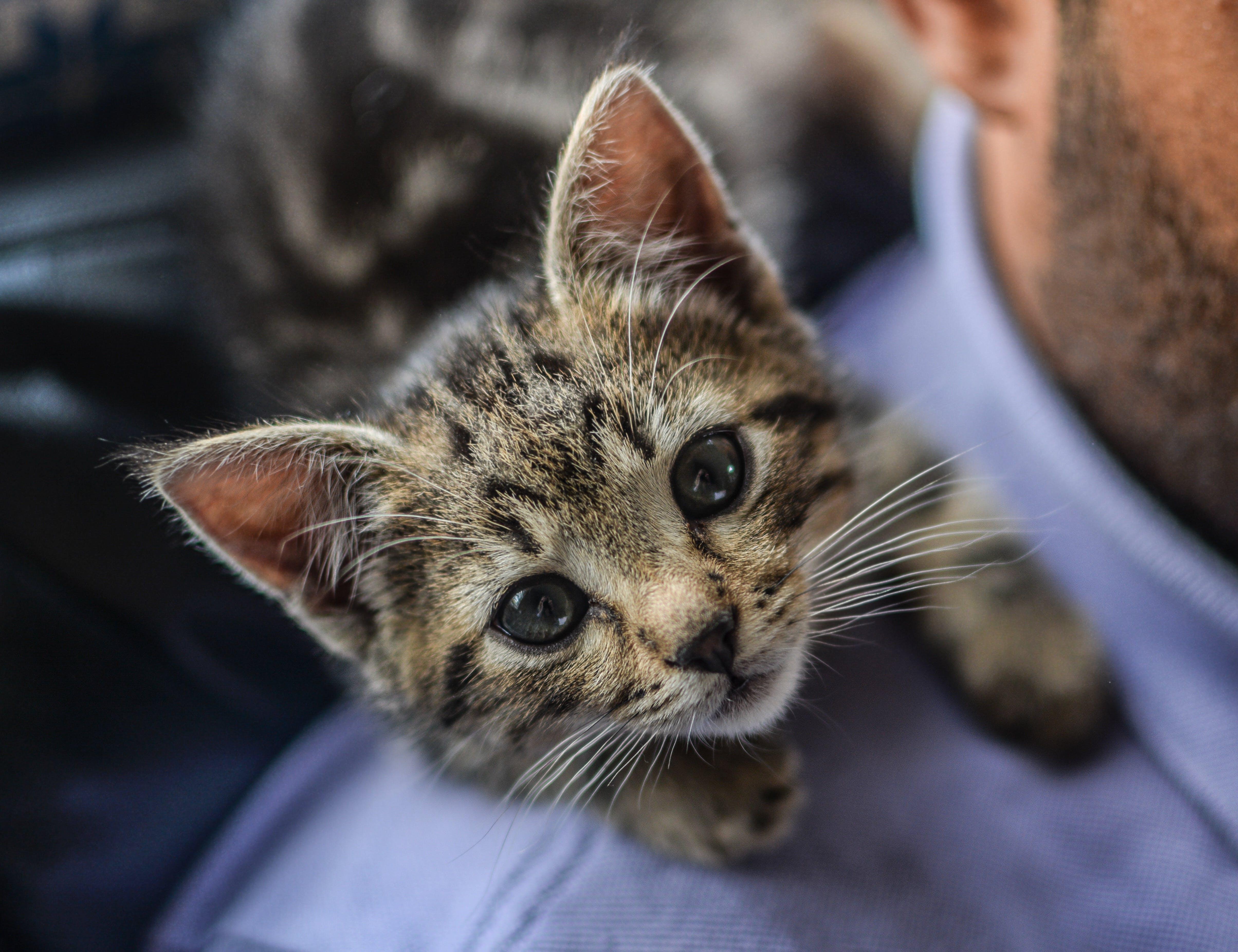 Free stock photo of animal, pet, fur, young