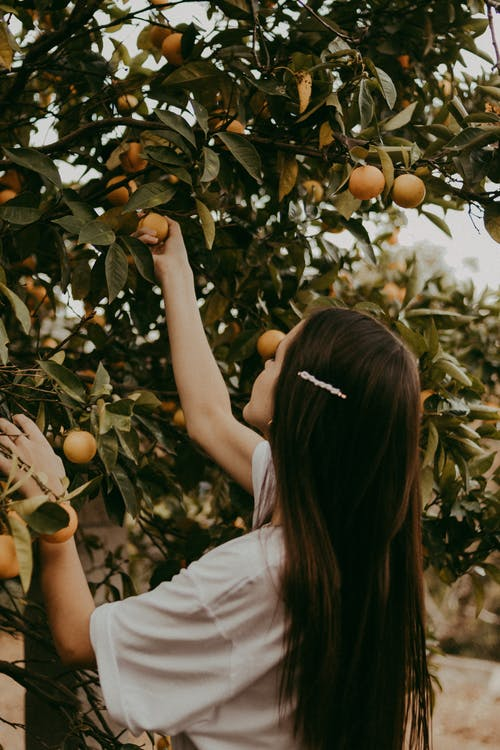 Side view of young female reaching out to ripe peach while harvesting fruits in summer garden