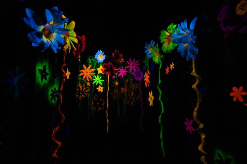 꽃, 다채로운, 어두운, 예술의 무료 스톡 사진