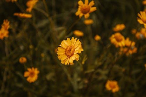 คลังภาพถ่ายฟรี ของ กลางแจ้ง, กลิ่น, กลิ่นหอม, ก้านดอก