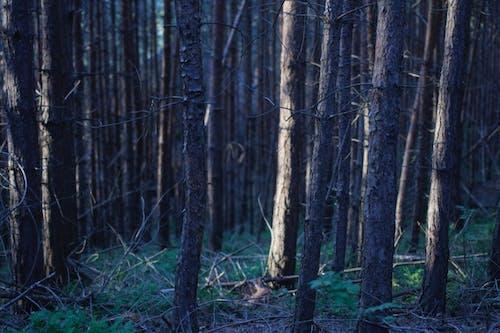 Fotos de stock gratuitas de arboles, bosque, ligero