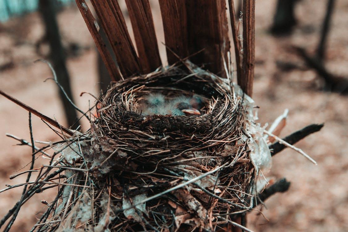 Δωρεάν στοκ φωτογραφιών με αγκαθωτό σύρμα, άγρια φύση, αγροτικός