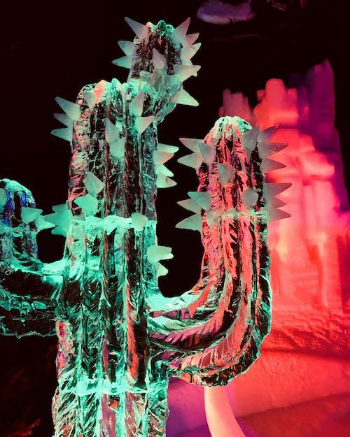 Free stock photo of art, art background, cactus, cactus plant