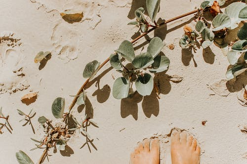 Crop faceless person feet on sandy ground with green plant