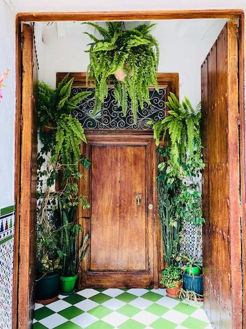 Free stock photo of backdoor, beautiful, decorative plant, door handle