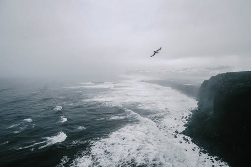 Bird flying over sea on misty day