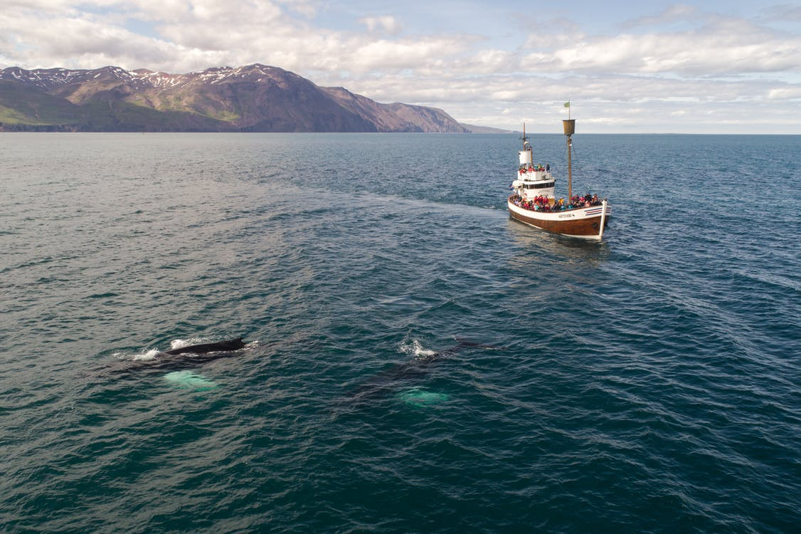 Tourist boat and whale in sea not far from shore