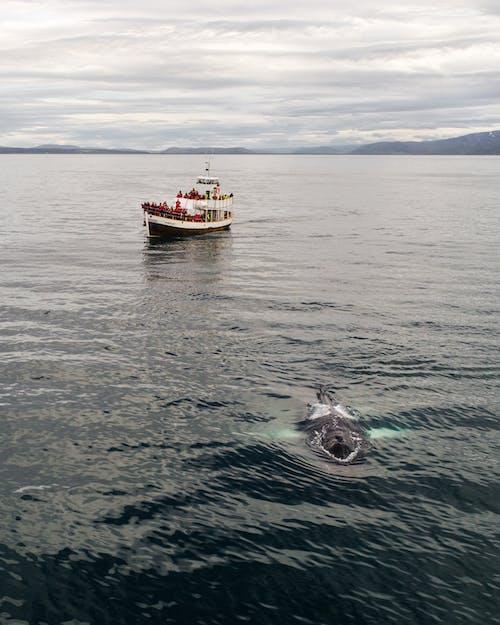 Sailboat floating in sea near humpback whale