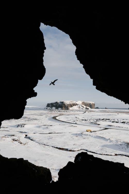 Bird flying over snowy terrain in Iceland