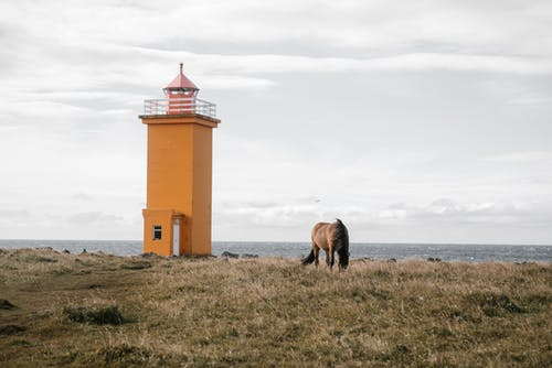 Small lighthouse and brown horse on withered autumn seacoast