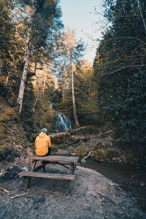 Person Sitting on Brown Wooden Bench in the Middle of the Forest