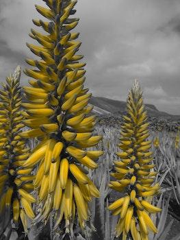 Free stock photo of landscape, nature, sky, plant