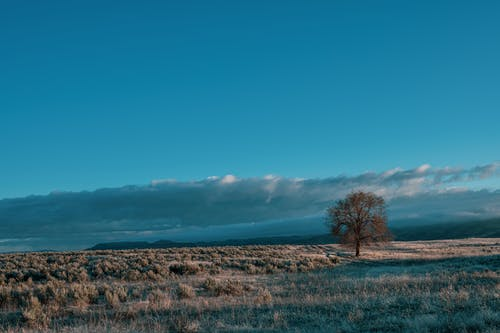 Endless plain landscape with single dry tree growing in grassy meadow against blue cloudy sky