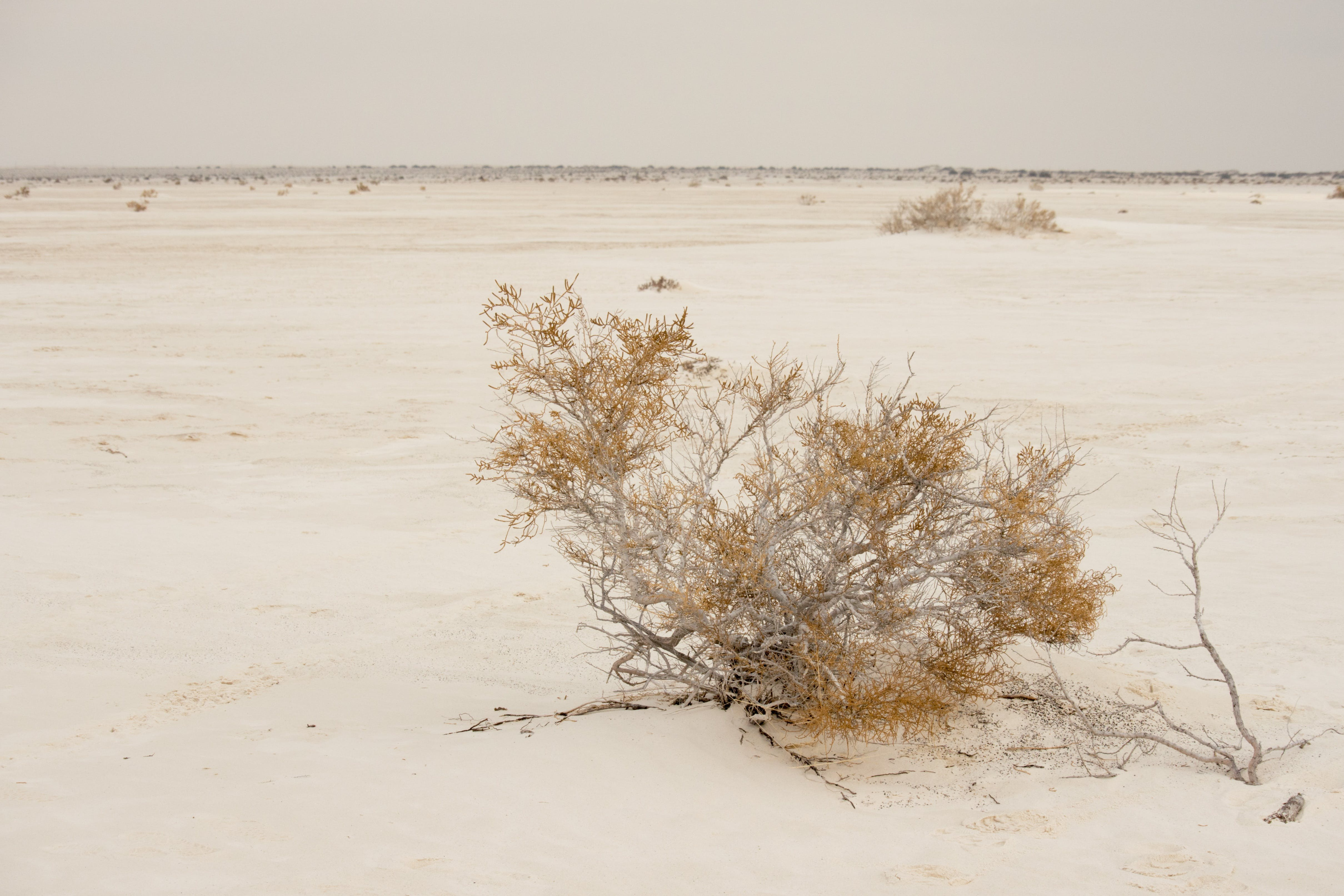 Free stock photo of national monument, off-white, creosote