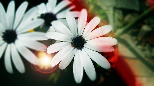 Free stock photo of beautiful flowers, flower petals, focus