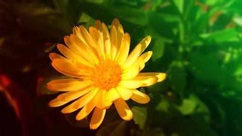 Free stock photo of beautiful flowers, desktop wallpaper, flower wallpaper
