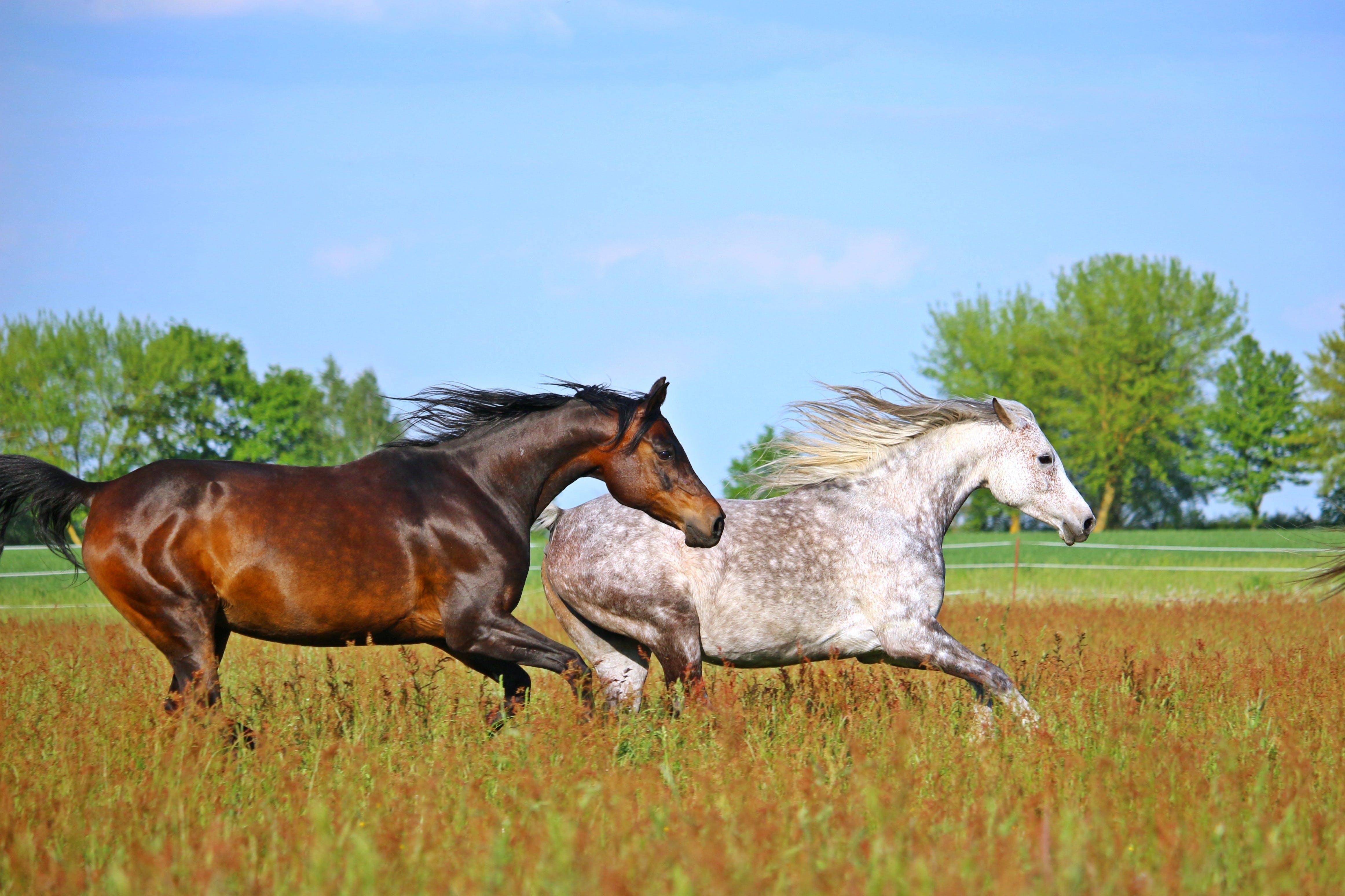 Free stock photo of animal, brown, horse, flock