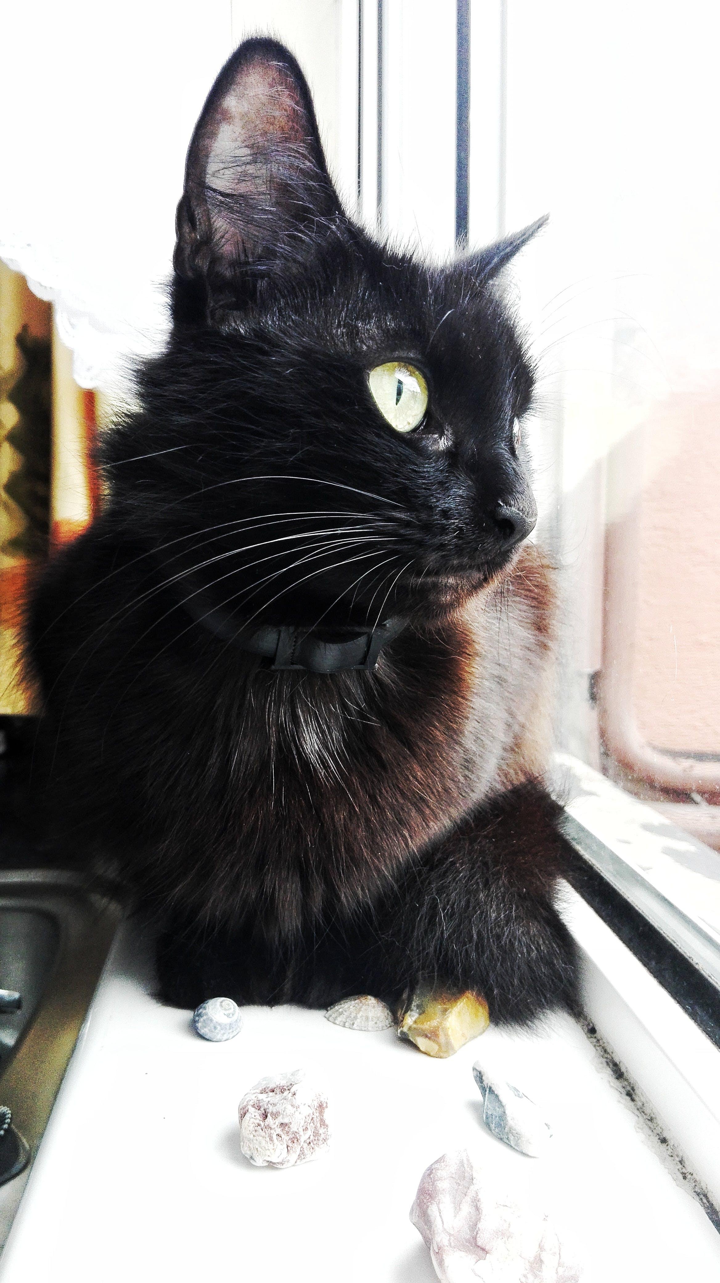 Free stock photo of black, cat