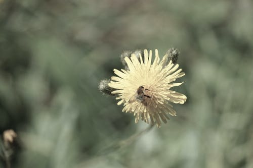 Free stock photo of abeille, butinage, été, faune