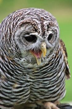 Free stock photo of bird, beak, owl, predator