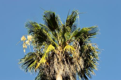 คลังภาพถ่ายฟรี ของ ต้นมะพร้าว, ท้องฟ้า, ธรรมชาติ, เขตร้อน