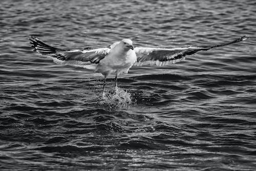 Foto d'estoc gratuïta de aigua, animal, au, au aquàtica