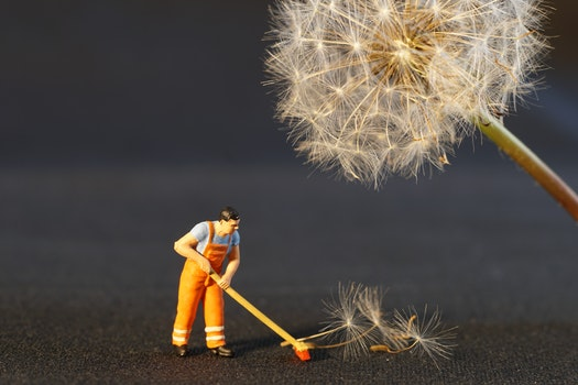 Free stock photo of flower, work, toy, dandelion