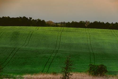 Free stock photo of dark green, field, grass