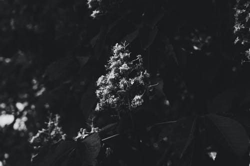 Free stock photo of beautiful flower, black and white, black and white background, leaf