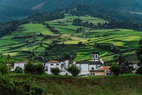 Foto profissional grátis de Açores, agricultura, área, árvore