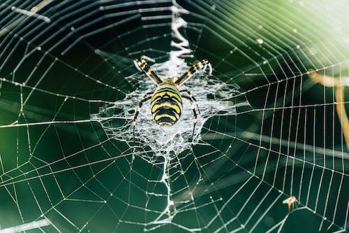 Foto profissional grátis de aranha, fotografia de insetos, teia de aranha