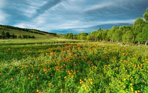 Ảnh lưu trữ miễn phí về bầu trời, bình dị, cánh đồng, cây