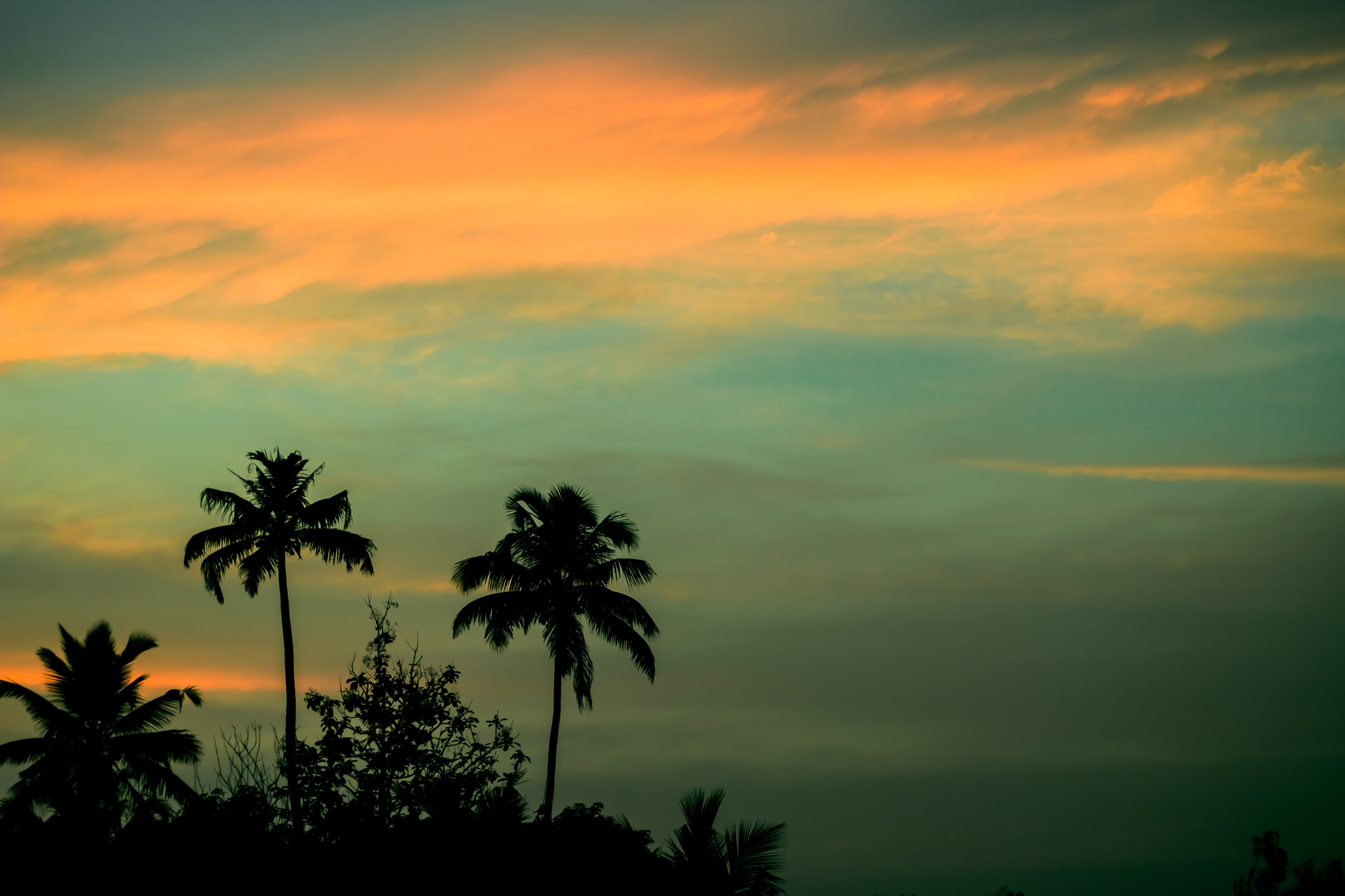 Foto stok gratis angkasa, awan, kelapa, langit