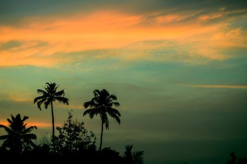 Foto d'estoc gratuïta de arbre, capvespre, cel, cels