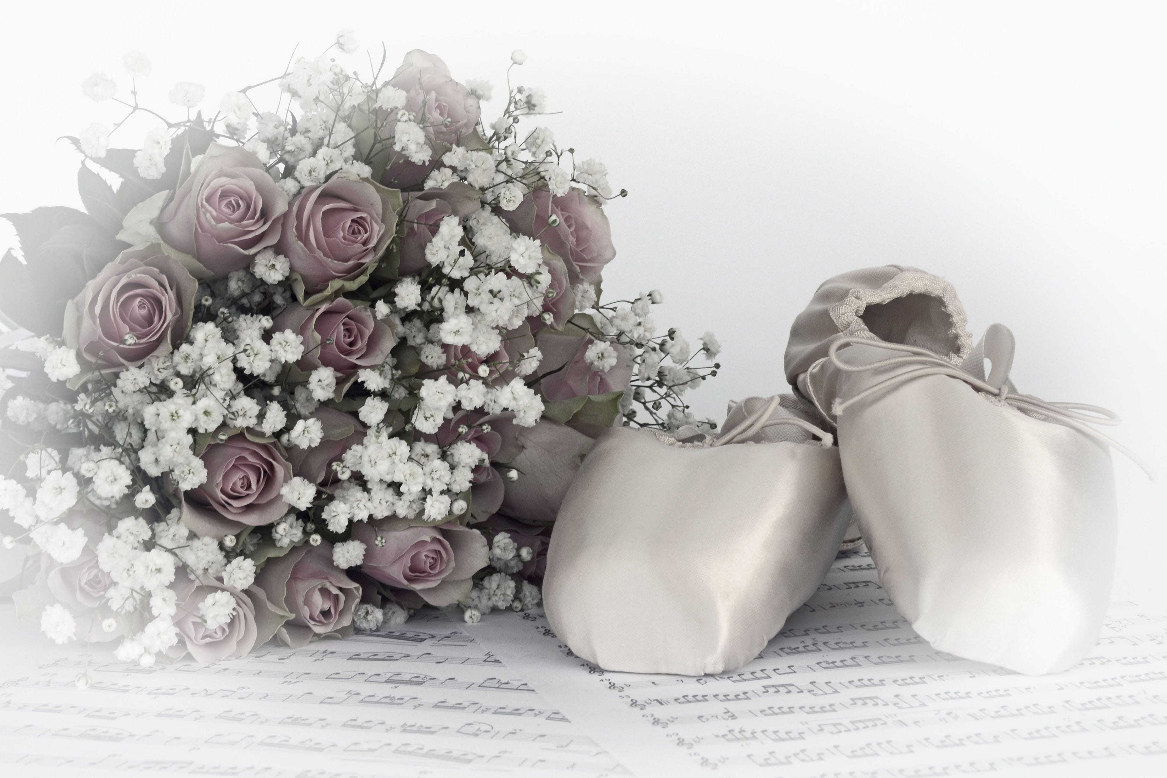 Free stock photo of flowers, music, roses, elegance