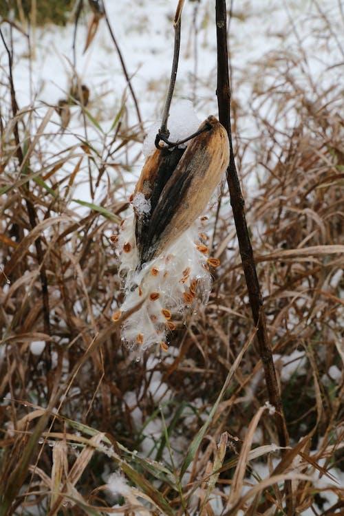 Free stock photo of dead grass, farm, field