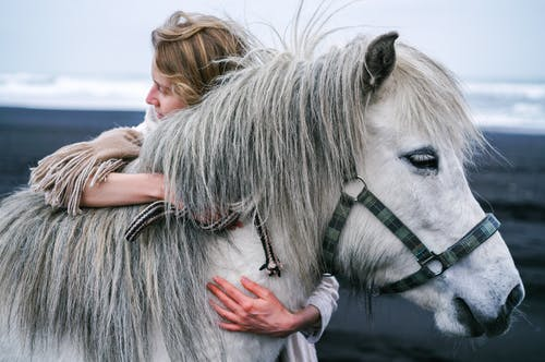 Blond lady cuddling warm blooded grey stallion with thick mane and white eyelashes in bridle while standing on seashore in afternoon and looking away