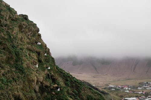 Amazing distance view of Nordic mountainous landscape with village and seabirds nesting on cliff slope covered with green mosses and lichens against overcast sky