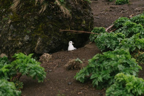 Foto profissional grátis de animais selvagens, áspero, aumentar