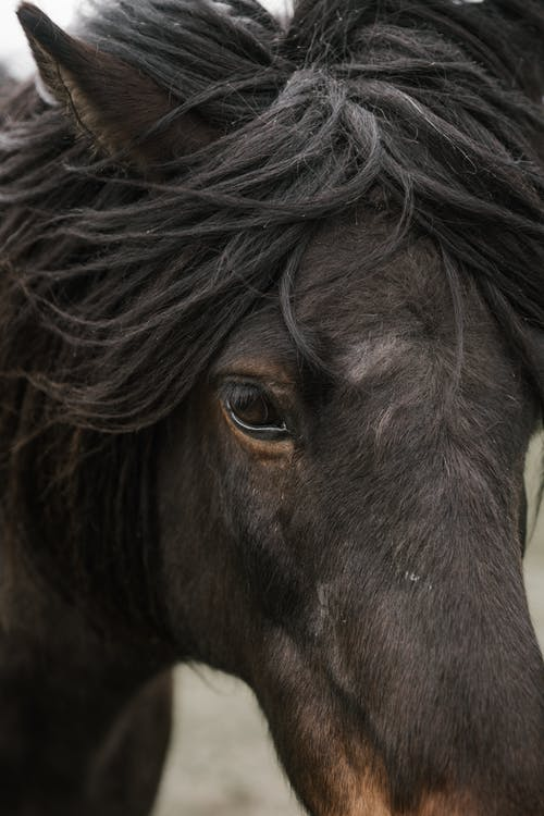 Black Horse in Close Up Photography