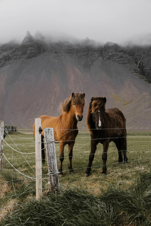 Domestic horses grazing in paddock in mountains