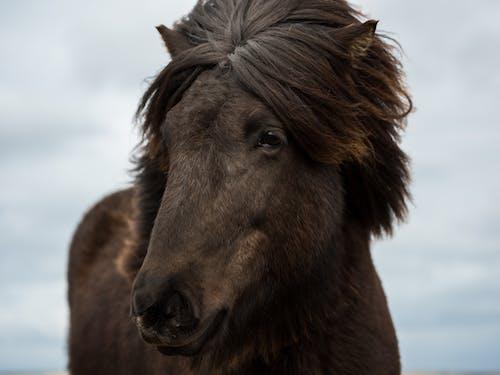 Dark brown horse with lush mane