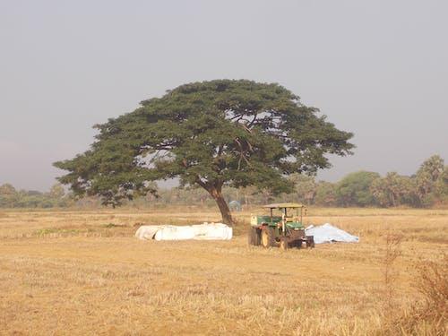 Fotos de stock gratuitas de arrozal, campo de arroz, primera hora de la mañana, pueblo