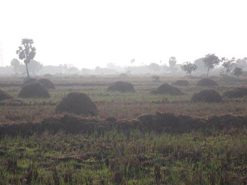 Fotos de stock gratuitas de campo de arroz, mañana de niebla, primera hora de la mañana, pueblo
