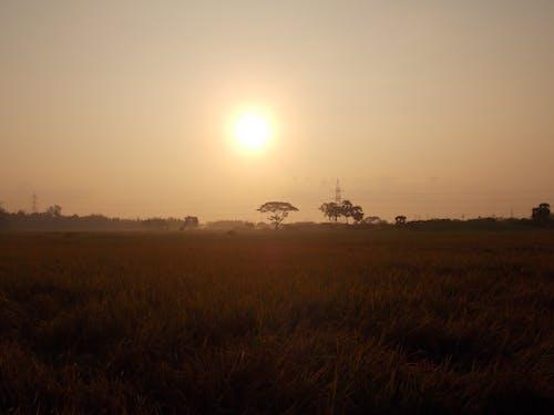 Fotos de stock gratuitas de amanecer, campo de arroz, gloria de la mañana, mañana de niebla