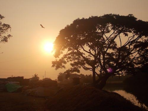Fotos de stock gratuitas de arroz abajo, belleza de la naturaleza, lado del río, orilla del río