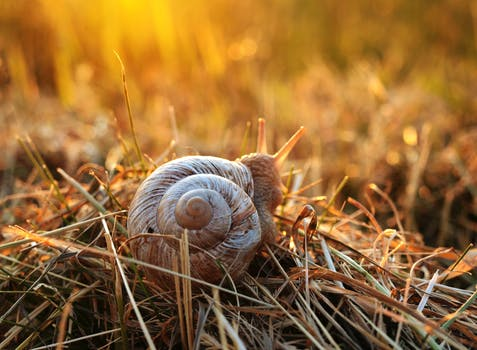 Black and Brown Snail Shell on Beige Textile · Free Stock ...