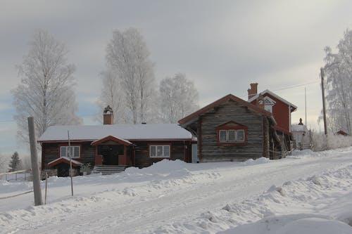 ağaçlar, ahşap, beyaz, buz içeren Ücretsiz stok fotoğraf