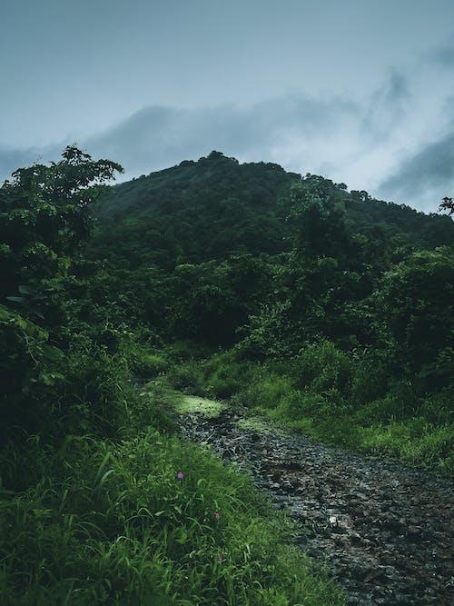 Free stock photo of atmospheric phenomenon, bush, bushes, cloud
